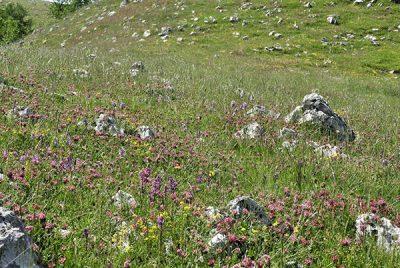 Valle delle Orchidee Sassano